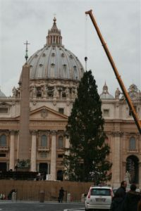 Christmas tree in St. Peter's Square
