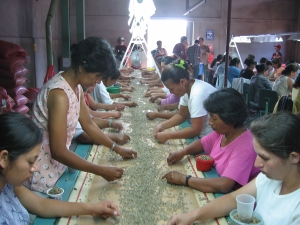 Nicaraguan women sort coffee beans on a conveyor belt under Catholic Relief Services' fair trade project. (Courtesy of Catholic Relief Services)