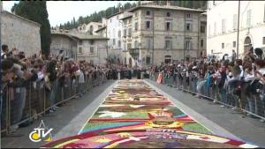 floral carpet assisi san rufino