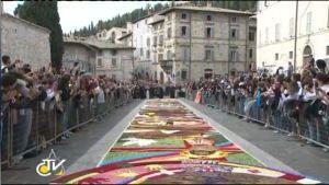 floral carpet assisi san rufino