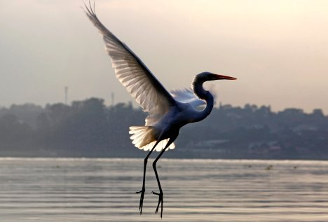 A heron flies over the Guarapiranga reservoir in Sao Paulo during sunrise, Feb. 13. (CNS/Reuters)